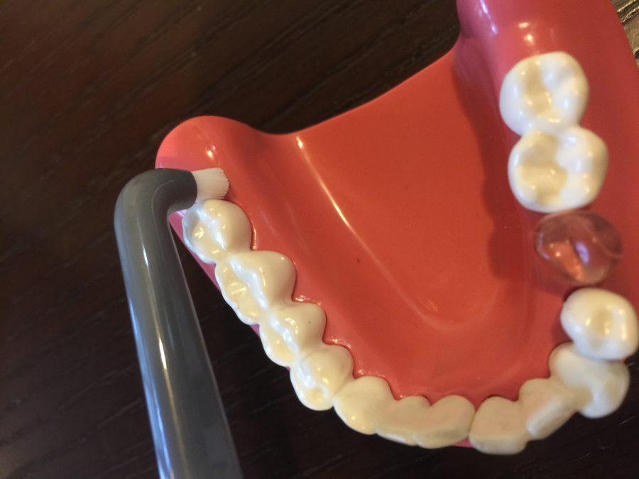 歯磨きの仕上げは「タフトブラシ」で決まり!!